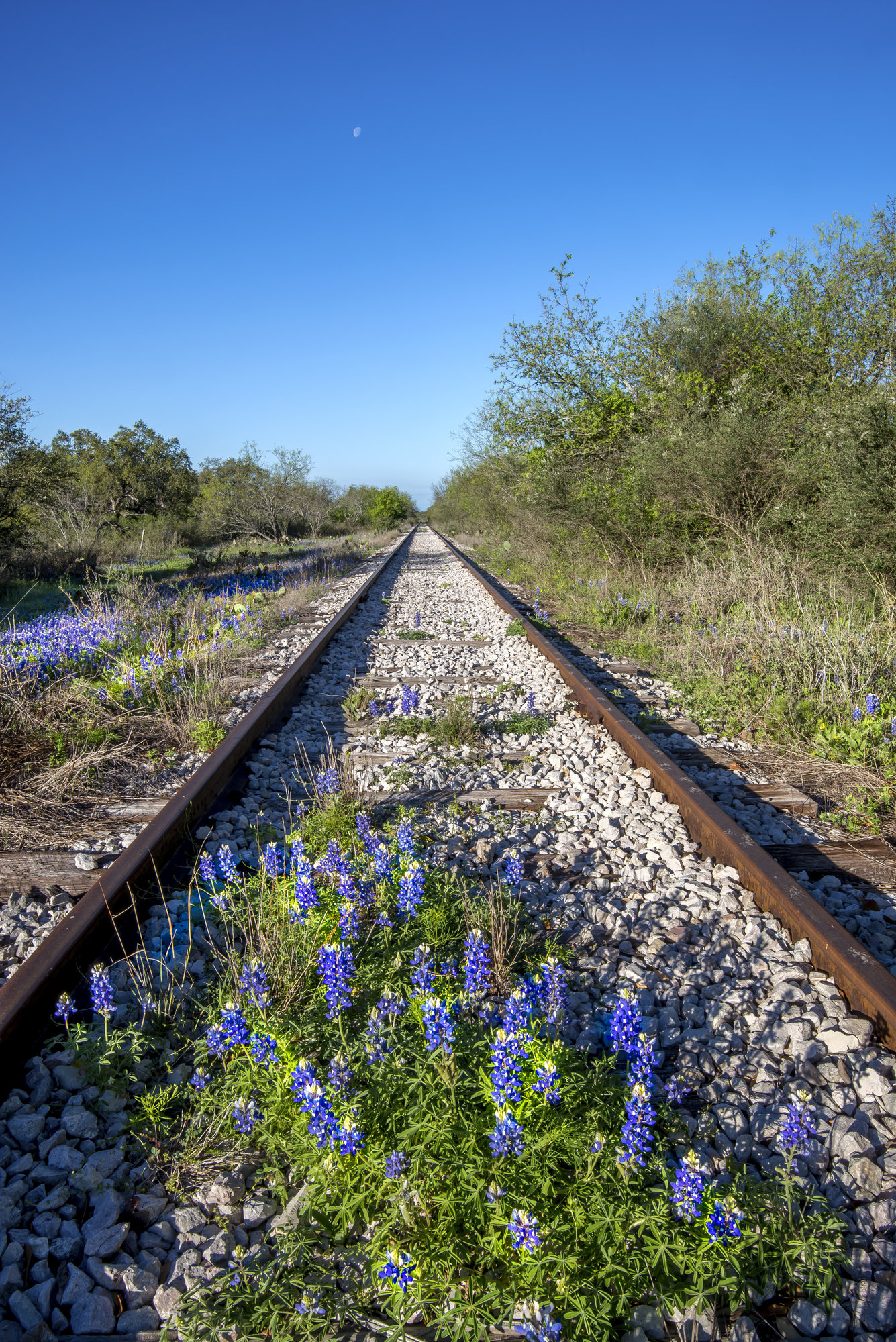Rails and Bluebonnets along the Llano River, Llano, Texas